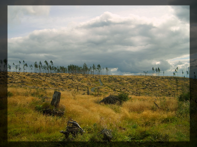 scenery01.jpg