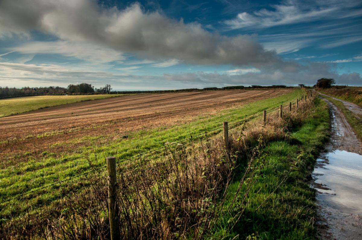 06-south-downs-way-fields.jpg