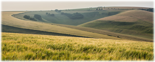 Fields of the South Downs
