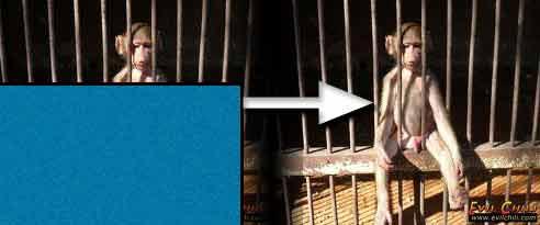 opica v klietke